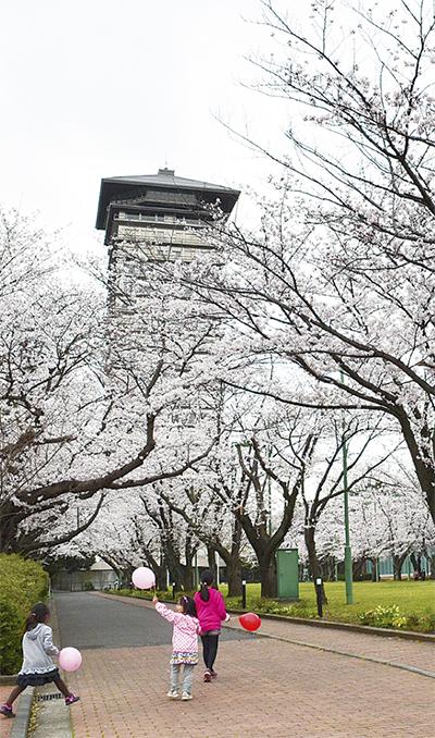 桜並木を一般開放