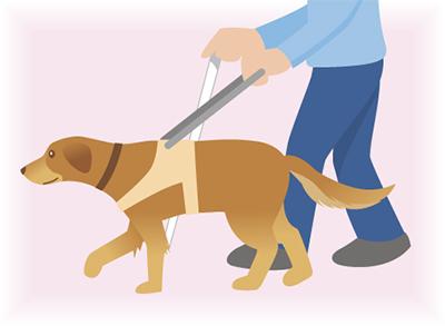 盲導犬とふれ合う