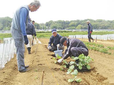 戸塚で本格農業体験