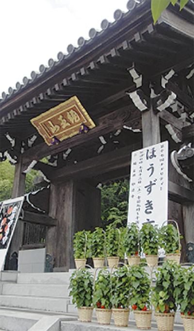 妙法寺のほおずき市