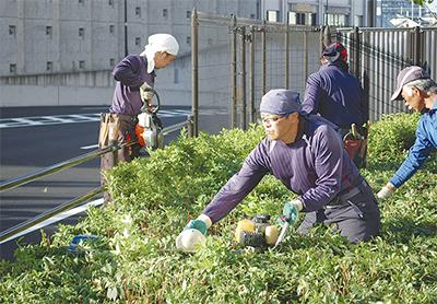 駅前植栽で手入れ作業