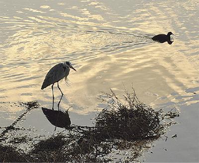 風景の中の野鳥を撮る