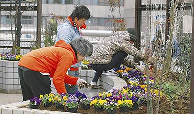 花苗250鉢を植栽
