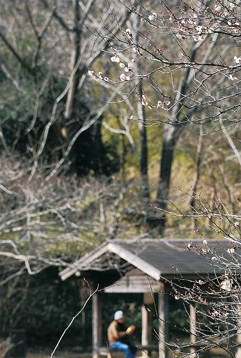 戸塚でも梅が開花