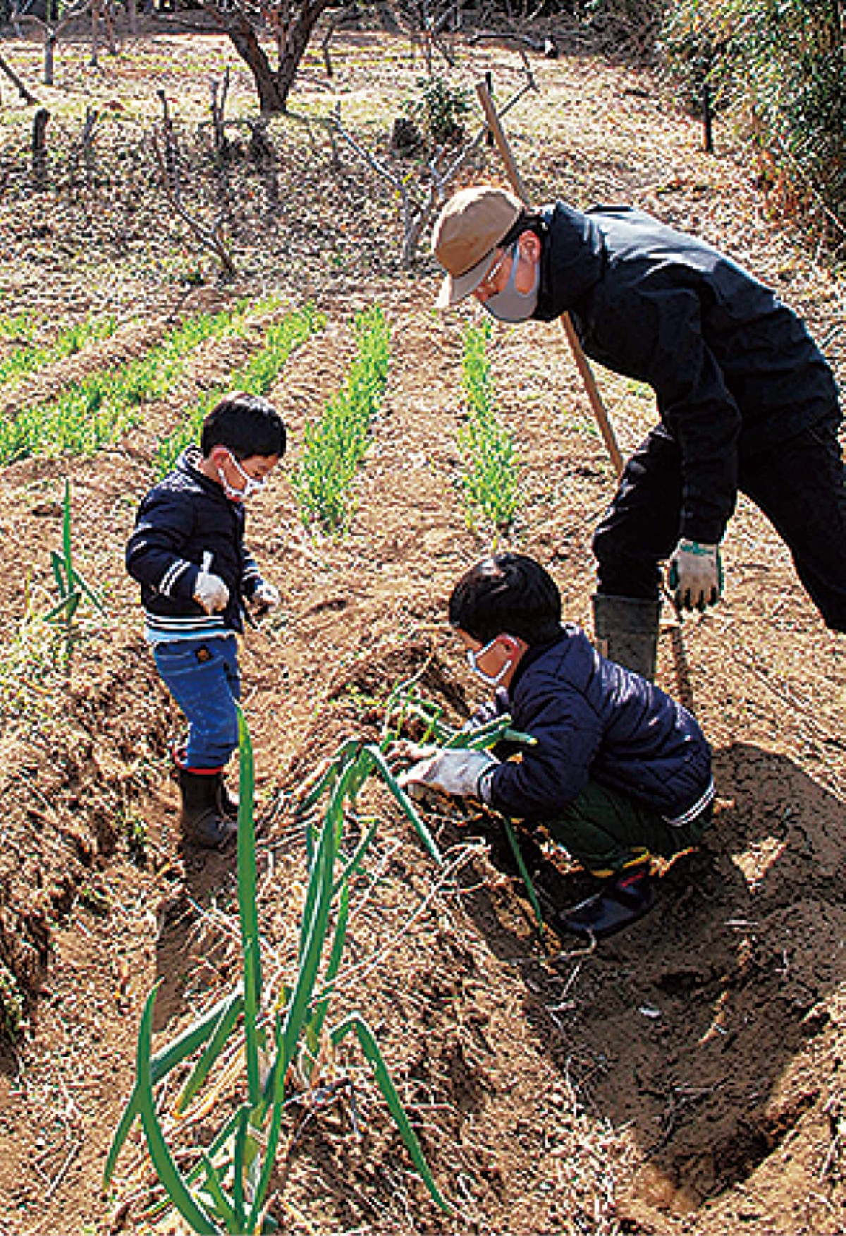 収穫体験や作陶を実施