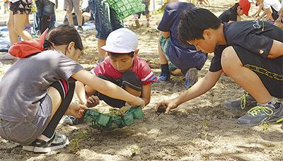 皆で作る芝生の校庭