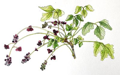 植物の魅力 水彩で描く