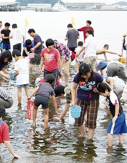 一生懸命に貝を探す参加者たち