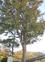 樹木に異変 台風影響か
