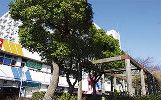 区民に親しまれてきた樹木