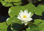 純白の花は涼を感じさせる清々しさ