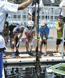 海藻の役割を学ぶ