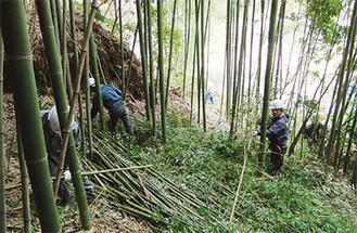 竹林の間伐体験も