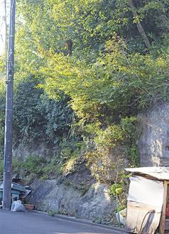 釜利谷東の「避難勧告対象地域」にある崖