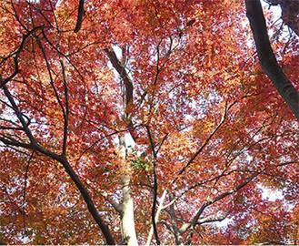 紅葉の美しさは必見