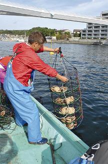 稚貝の入ったカゴを海中に設置する