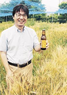 木原研究所の麦畑と坂教授
