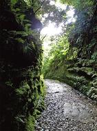 「道歩き」で地域の魅力発見