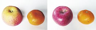 リンゴとミカンの柄を上にした場合(写真右)=と下にした場合(同左)