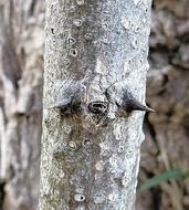 雑木林で「動物似顔絵」探し