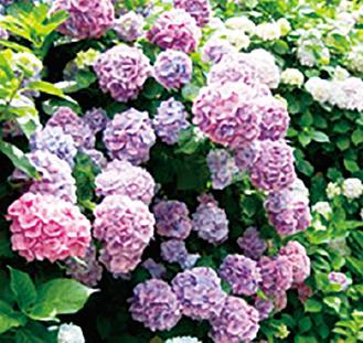 季節の花をめぐる