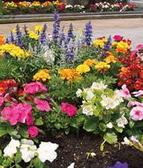 地域と作った夏花壇