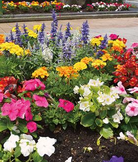 西富岡小の児童が植えた花の数々