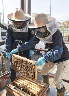 巣枠を持ち上げ内見する三村さん(左)と山本さん