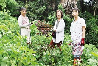 赤シソなどを収穫する上岡さん、鈴木さん、照井さん(右から)