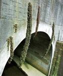 長浜公園の排水口