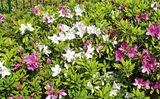 変化に富んだ花の色
