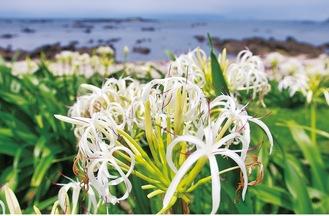 白い花が映える(7月10日撮影)
