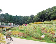 19日から、大花壇公開