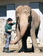 ゾウの飼育環境改善が評価