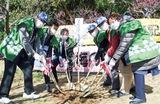 洋光台のシンボル「梅」植樹