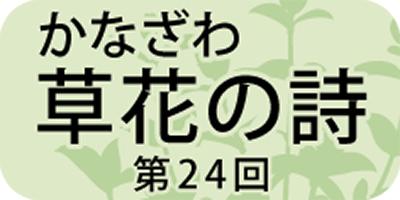 花の源平合戦「ハコネウツギ」
