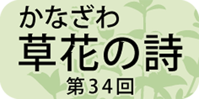 枕草子にも登場する「ナツヅタ」