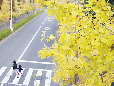 黄葉 晩秋彩る