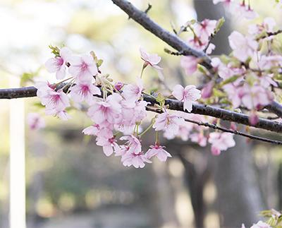 春の訪れ  一足早く