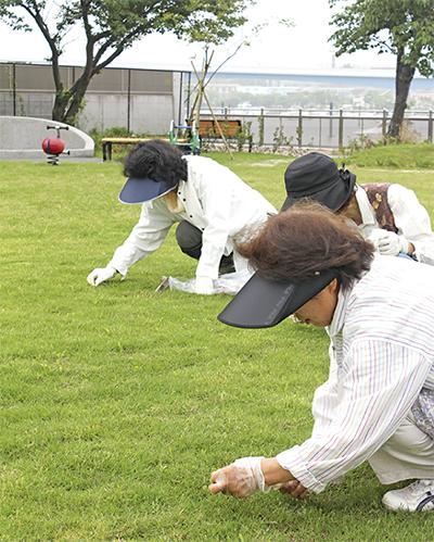 洲崎公園 一面「芝」に