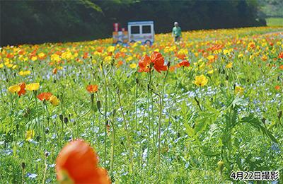 色鮮やかに開花リレー