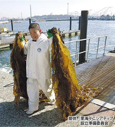 コンブで海環境を改善