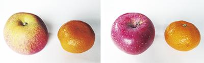 果物の頭はどこ?