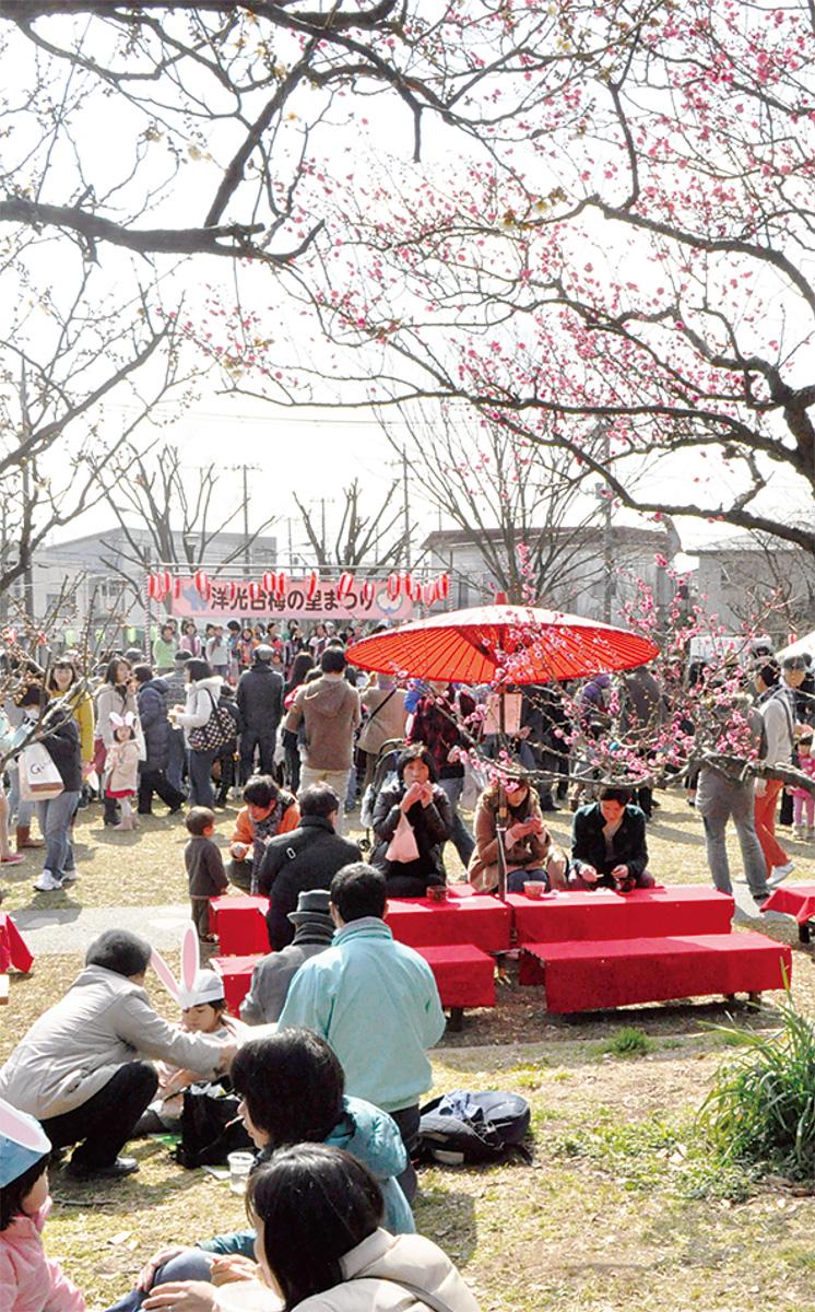 磯子 2地区で梅まつり