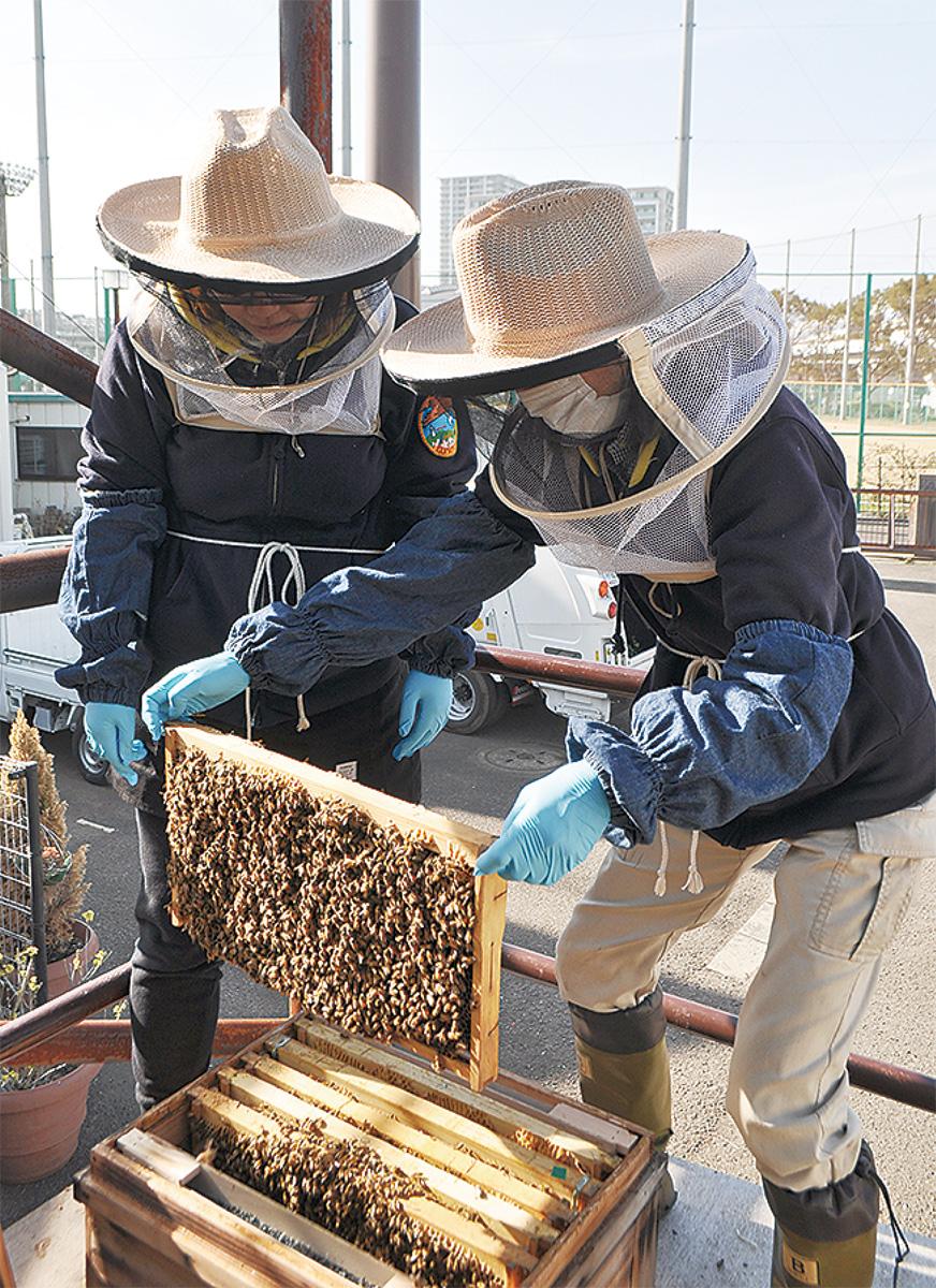 新杉田公園でハチミツ作り