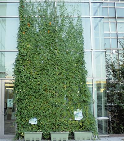 壁面緑化でコンテスト