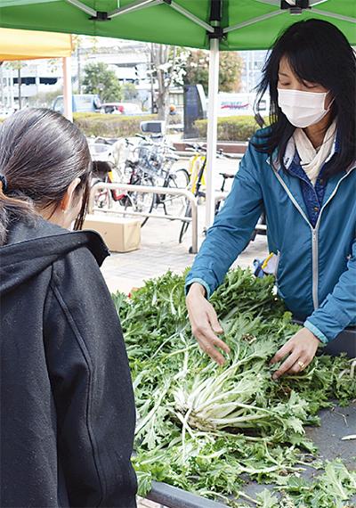 復活の磯子京菜を販売