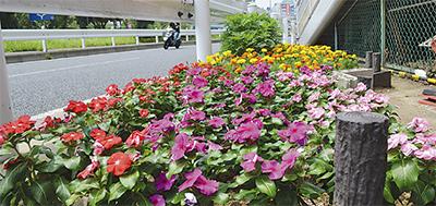 歩道脇の花壇 美しく