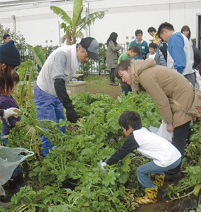 子どもが地元野菜収穫