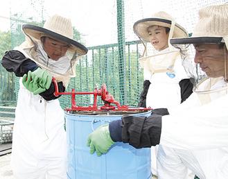 分離機を回し、ハチミツを収穫